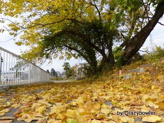 生涯学習!by Crazybowler-三峰山 紅葉2012