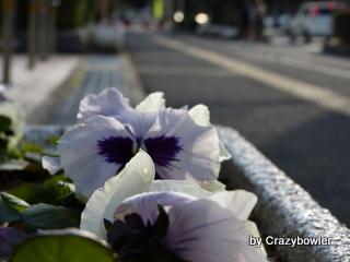 生涯学習!by Crazybowler-徳山2013
