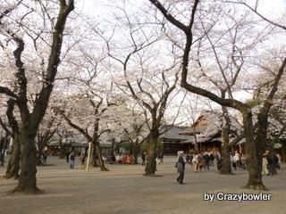 生涯学習!by Crazybowler-靖国神社 2013/3/22