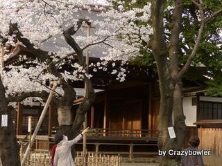 $生涯学習!by Crazybowler-靖国神社 2013/3/22