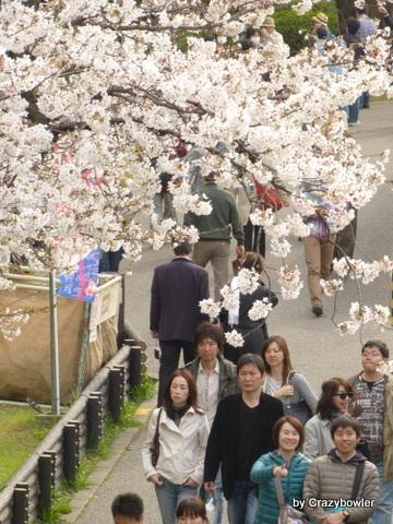 生涯学習!by Crazybowler-隅田公園の桜 2013/3/23