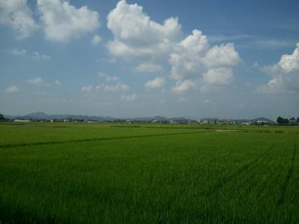 2013/8/18 稲美町