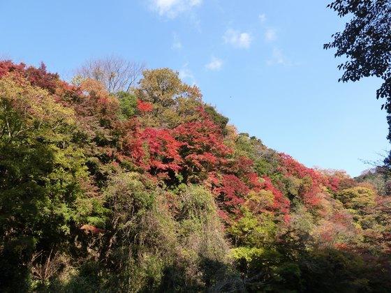 遊歩道からの眺める紅葉