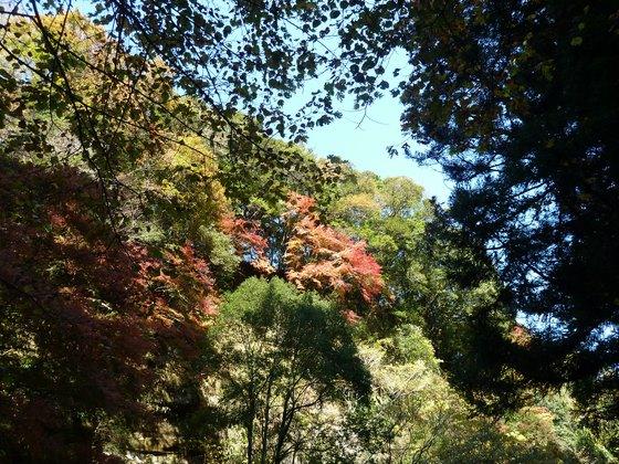 滝めぐり遊歩道からの紅葉模様