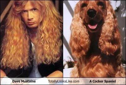 dave_mustaine お犬様と比較されている大佐ちゃん