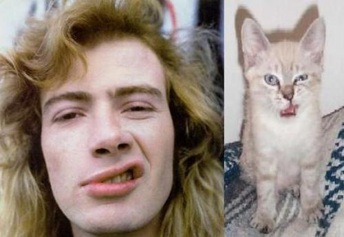 dave_mustaine お猫様と比較されている大佐ちゃん