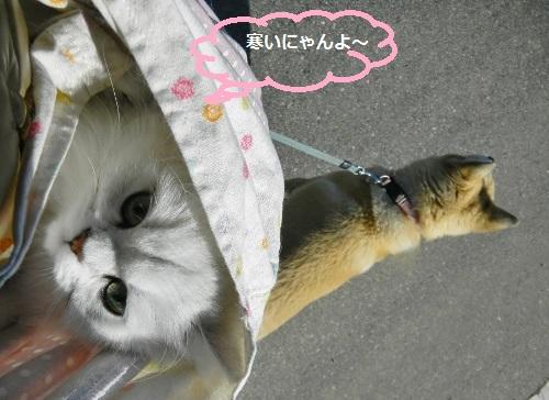 スリング2