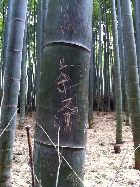 嵯峨野の美しい竹林が韓国人に荒らされている