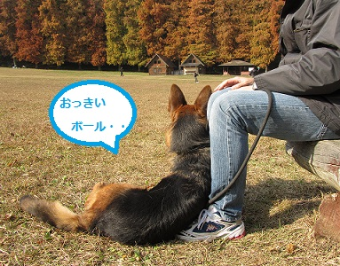 ひっつき犬①