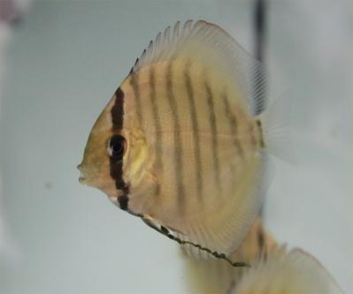 2013-5-4稚魚1