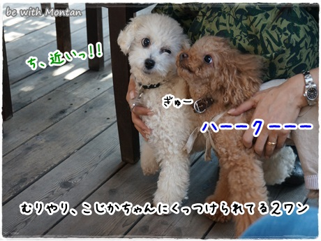 DSC05251-20131005.jpg