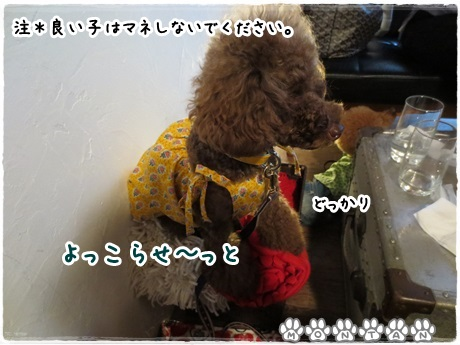 IMG_1566-20130709.jpg
