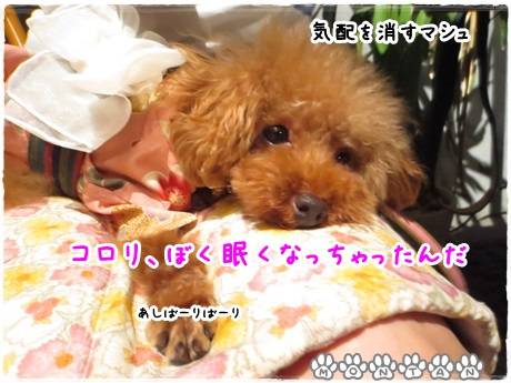 IMG_1705-20130716.jpg