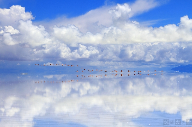 塩湖の上を飛ぶフラミンゴ1
