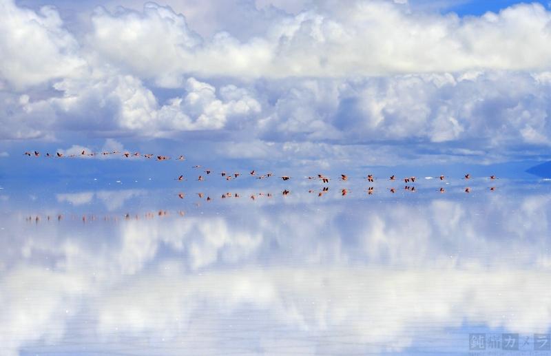 塩湖の上を飛ぶフラミンゴ 2