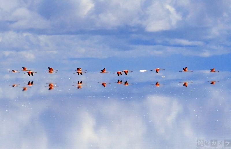 塩湖の上を飛ぶフラミンゴ 3