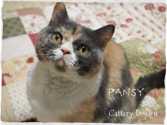Cat S Pajamas Cattery