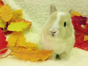ミニウサギ4
