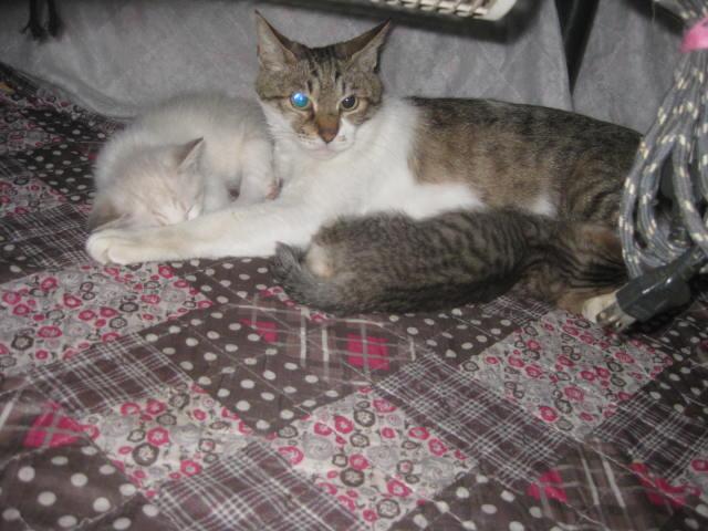 先月生まれた兄弟+母猫