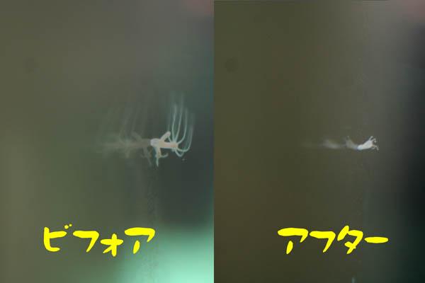 130823-1.jpg