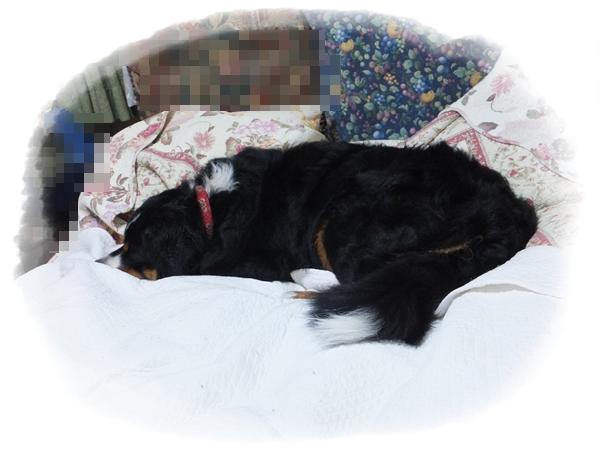 ①ベッドのエルフ