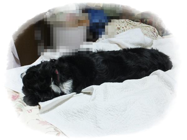 ベッドのエルフ2