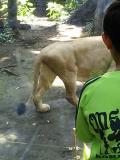 上野ライオン