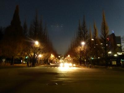 外苑イチョウ 2013 12.15