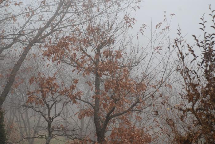 霧に覆われた山