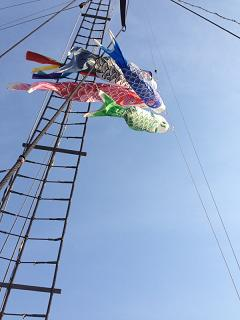 観光船の鯉のぼり