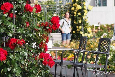 roses130515 17