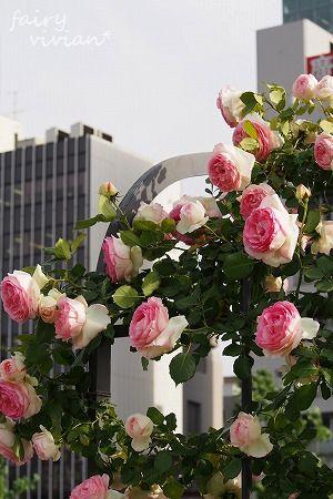 roses130515 19