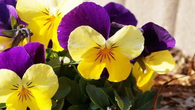 植物10枚目 640x360サンプル