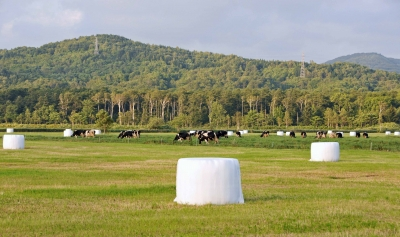 幌延町の酪農地帯