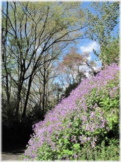 130407G 019紫の花
