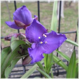 130420G 022青紫