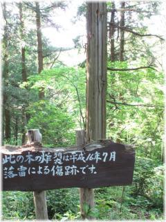 130504G 030炸裂樹木A