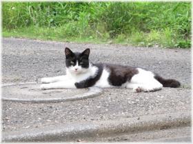 130615G 010白黒猫