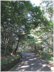 130901G 017蝉の森