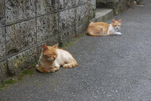 20130706 猫は猫で