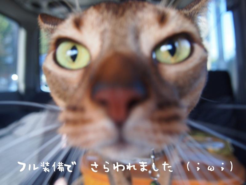 PA130617_2.jpg