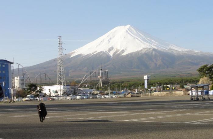 富士山の見えるドックラン