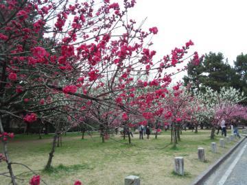 kyotogosho4.jpg