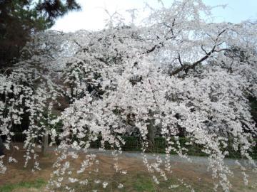 kyotogosho6.jpg