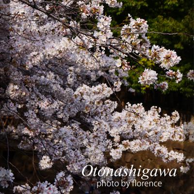 桜130308_edited-1