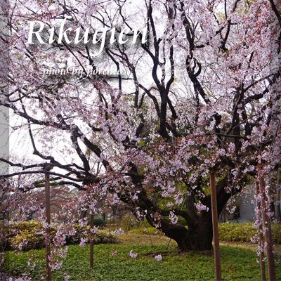桜130310_edited-1
