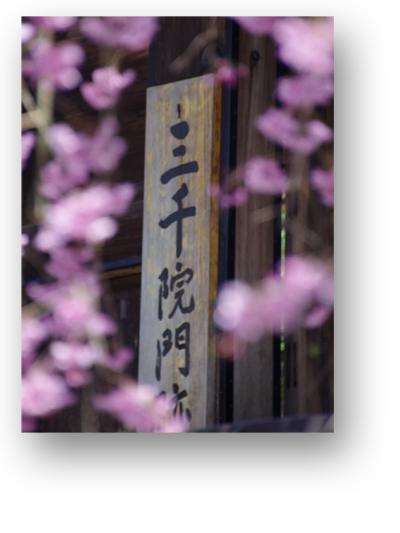 三千院130406_edited-1