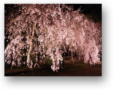 平安神宮130404_edited-1