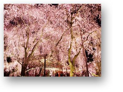 平安神宮130405_edited-1