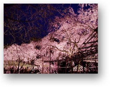 平安神宮130406_edited-1